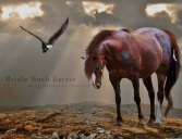 ,4y.Native_American_Horse_by_Delusional_Art