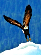 Eagle flies highest and closest to Grandfather Sun....