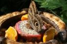 btfdragonfruit