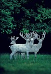 The antlers on the white stag are compared to tree-branches and thus may represent fertility, since they are shed and re-grown year after year.